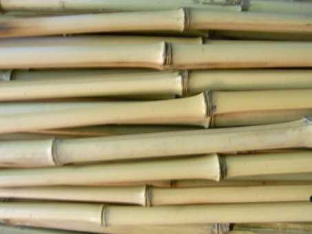 Bambusrohr Ø 1-2 cm 1 Meter