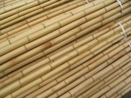 Bambusrohr Ø 2-3 cm 1 Meter