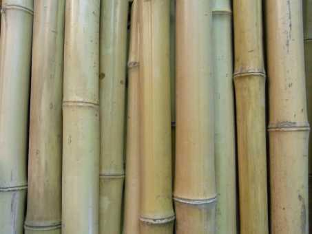 Bambusrohr Ø 7-8 cm