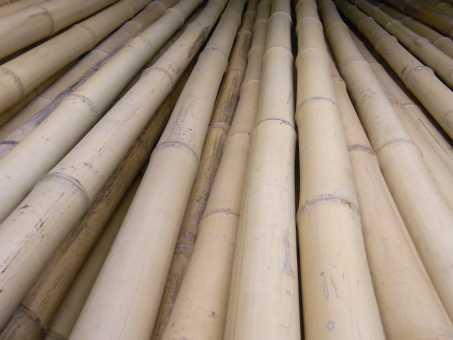 Bambusrohr Ø 6-7 cm