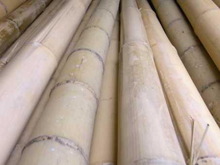 Bambusrohr Ø 9-10 cm
