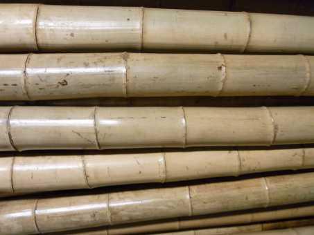 Bambusrohr Ø 11-12 cm 2 Meter