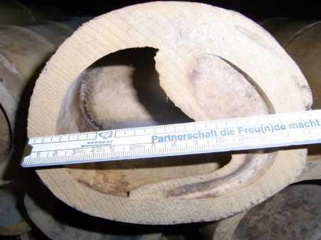 Bambusrohr Ø 13-14 cm