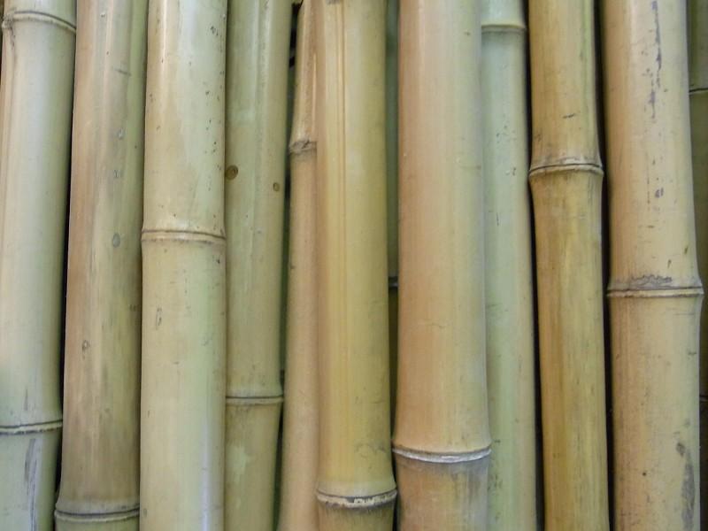 Bambusrohr Bambusstange Bambushalm Bambus Bambusrohre 1 x 6-7 x 2 m 60-70 mm